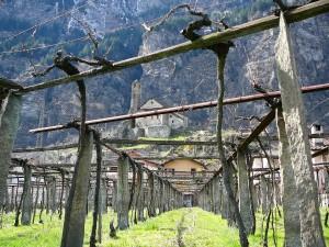 Winnica w Giornico w Ticino.
